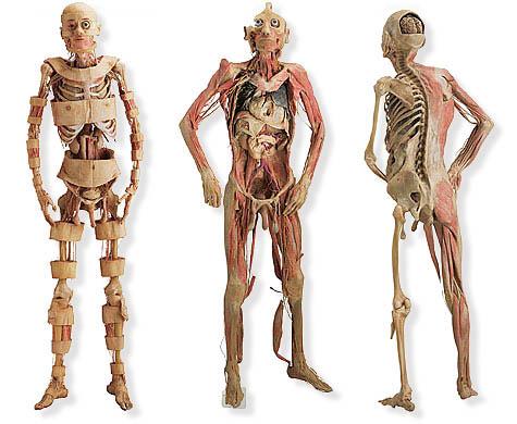 Nuestro cuerpo. Curiosidades sobre el cuerpo humano.